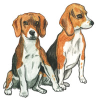 Tucker & Bowen, Beagle