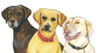 Augie, Jewel & Bentley, Labrador Retrievers